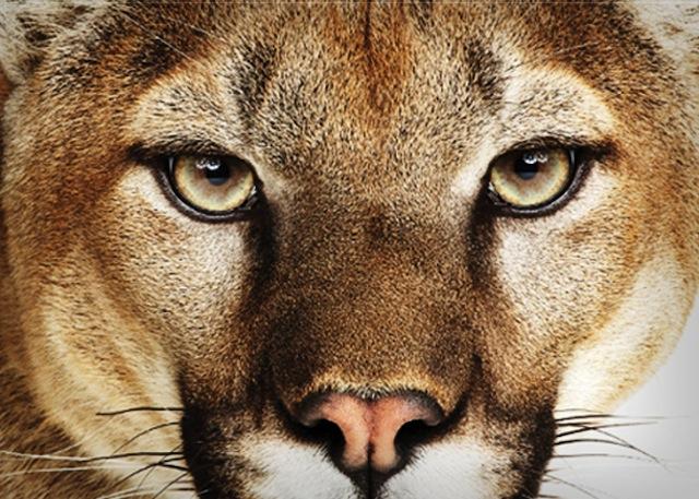 Lion OS X 10.8.3