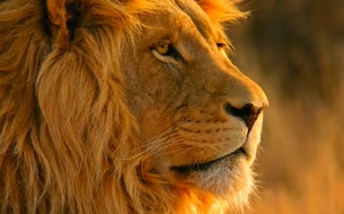 Mac OS X Lion sarà rilasciato il 14 giugno?