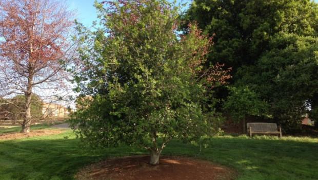 La Pixar dedica un albero a Steve Jobs